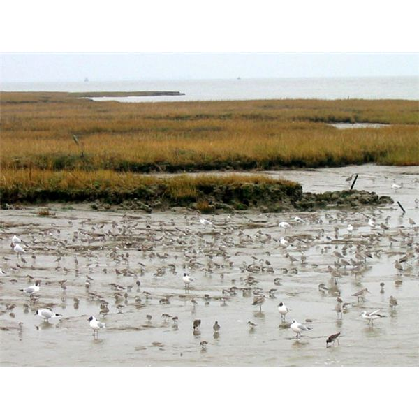 Birds at Two Tree Island - geograph.org.uk - 51307