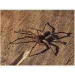 Close range shot of wolf spider with 70-300mm zoom