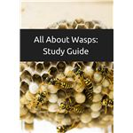 All About Wasps  Study Guide