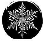 Snowflake Steller Dendrite