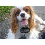 Dog GPS by PT The Commons