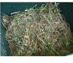 Compost Pile Image Credit: Ksd5/Public Domain
