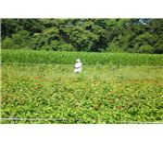 800px-Migrant Worker by David Shankbone