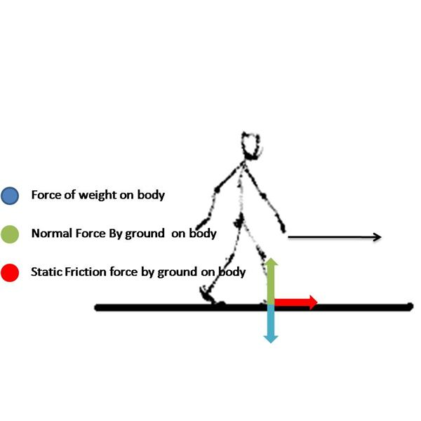 Free Body Diagram of Man