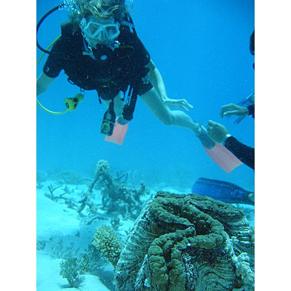 Giant Clam with Diver