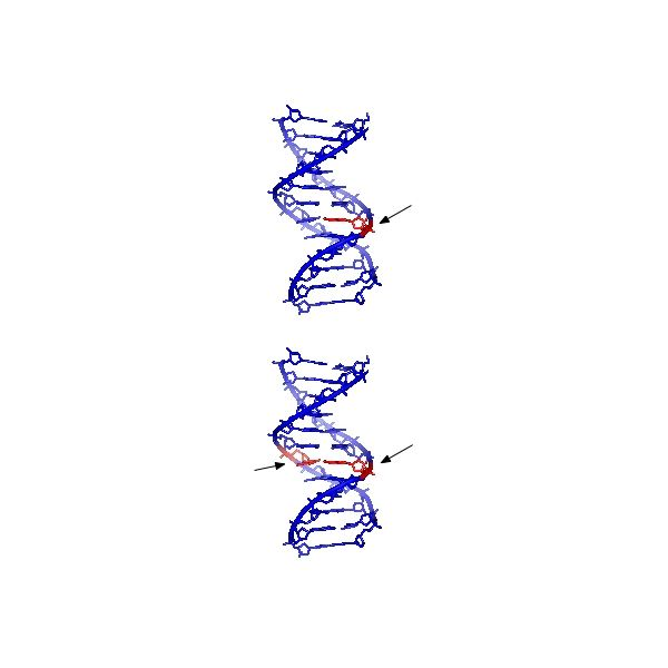 DNA stands for Deoxyribose Nucleic Acid