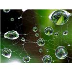 Spider-web water drops