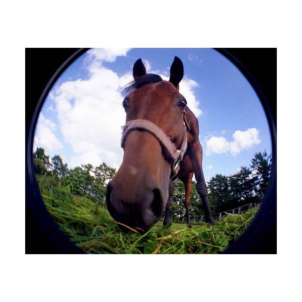 Using a Fisheye Lens