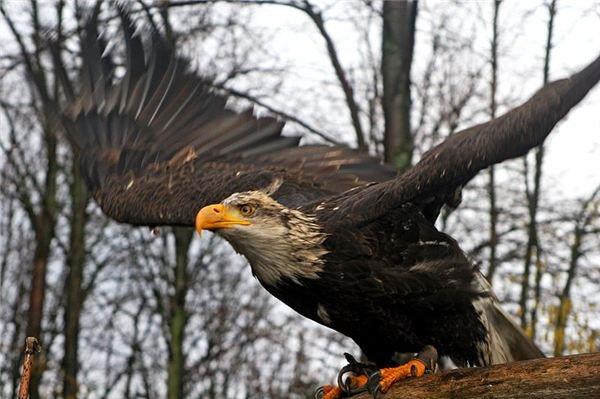 You've Gotta Fly Like an Eagle