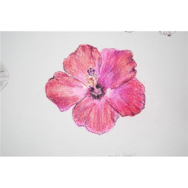 pastel pencil of hibiscus by Robyn Clarke