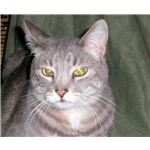 Pete with Green Eyes