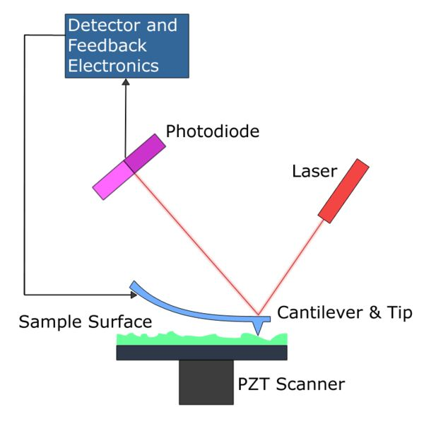 Atomic Force Microscopy - AFM (Contact Scanning Mode)
