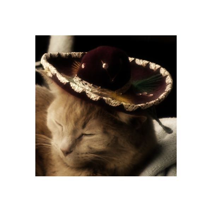 Cat Soften Portrait