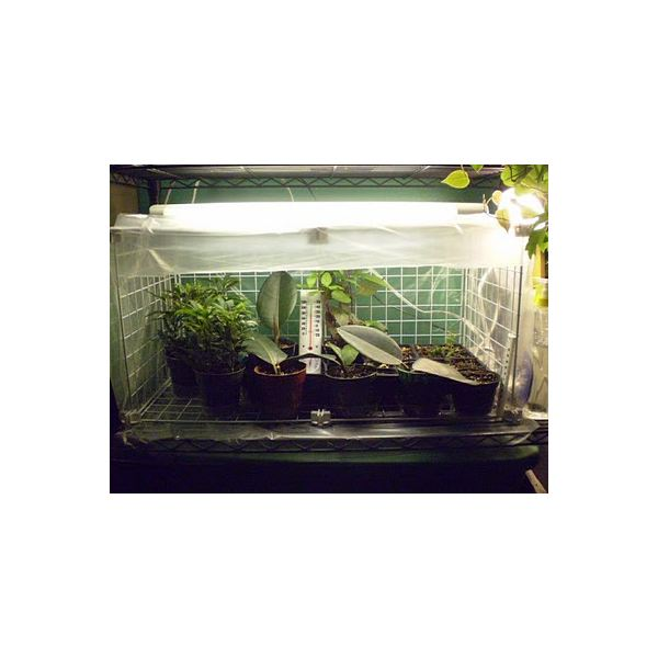 Mini Greenhouse 2
