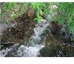 creek by Carla Michelle