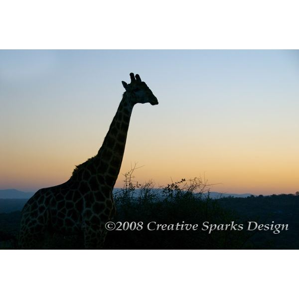 African Safari by Creative Sparks Design
