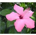 Flower After Decorator