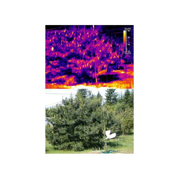 Infrared Tree