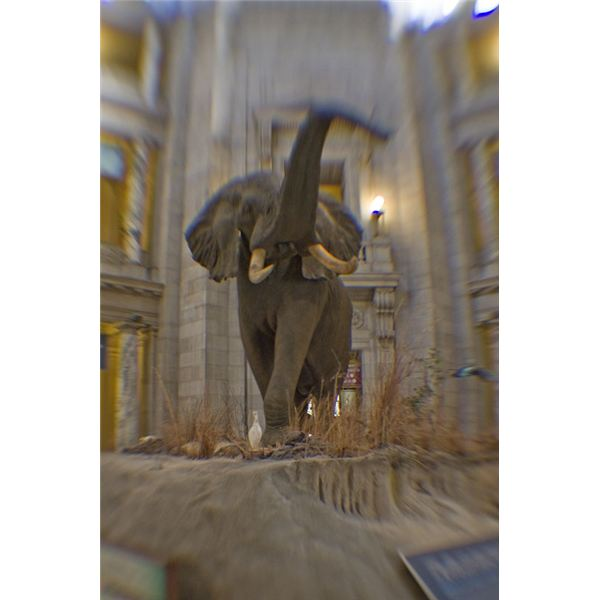 Elephant at entrance to the Natural History Museum