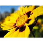 Flower Pictures - How to create DOF