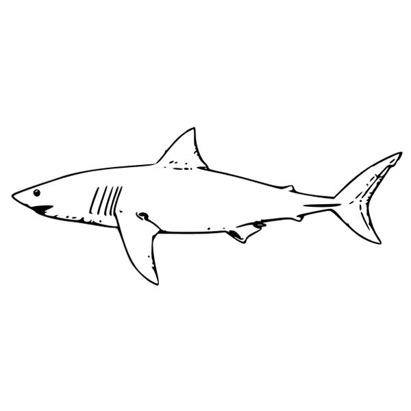 Preschool Shark Facts And Two Activities Your Students Can