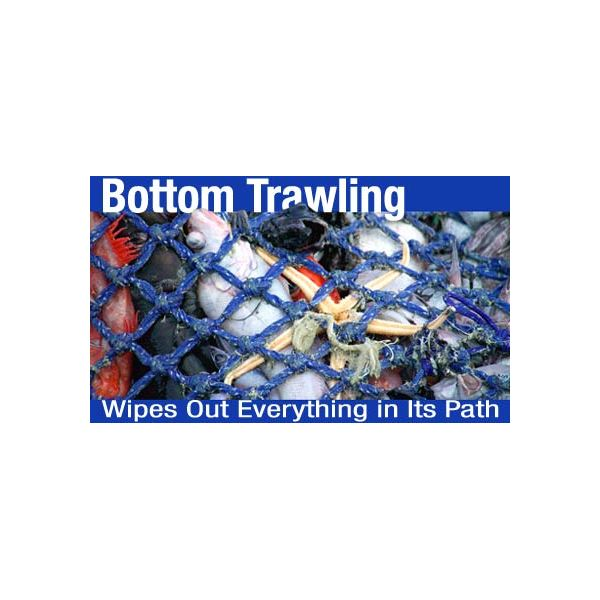 bottom-trawling courtesy of Greenpeace