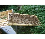 Man made hive.