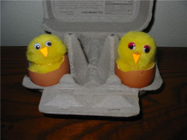 Hatching Baby Chicks