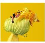 Baby Bumblebee on Pumpkin Flower by Anne Geddess