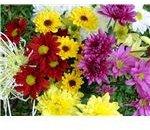 teacher bouquet Berchmans 003