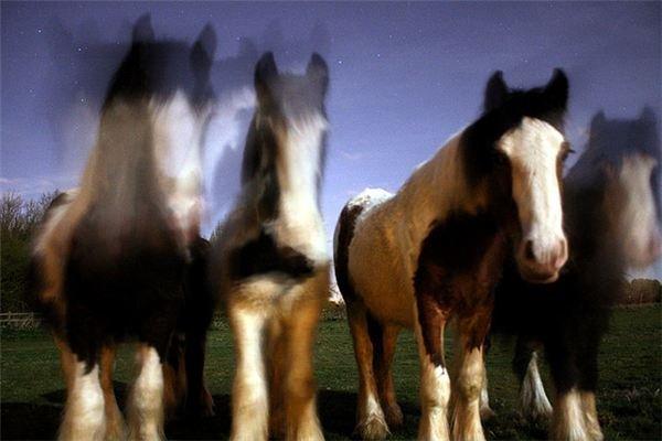 Spookie Horses