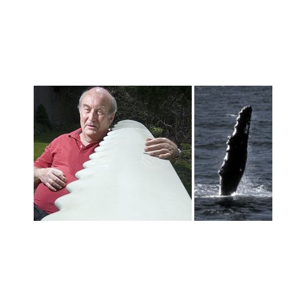 whalepower-biomimicry-whale-tubercles-wind-turbine