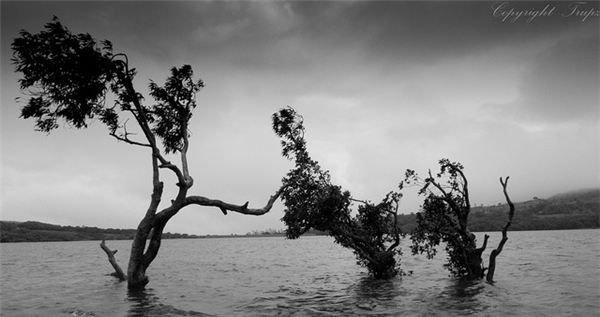 Tree in Kaas Lake