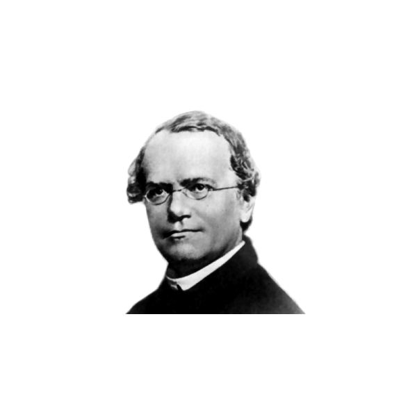 Translations Into Italian: Lesson Plan On Gregor Mendel & Punnett Squares