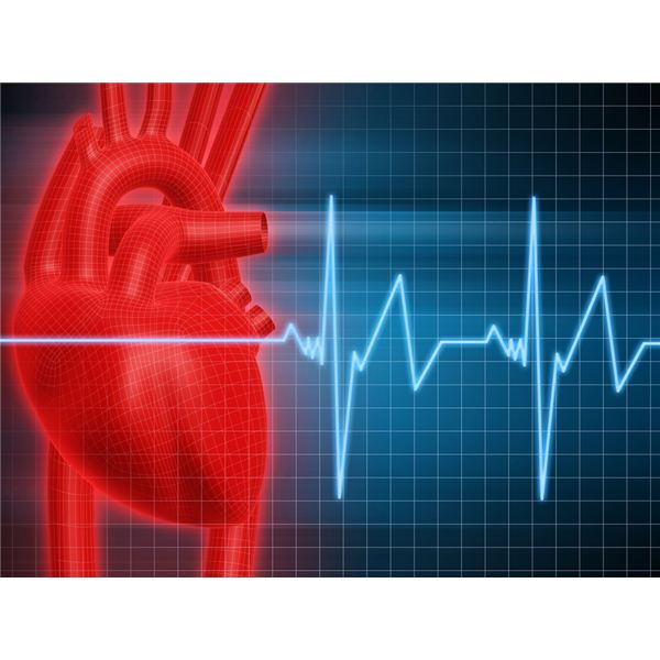 Cardiovascular Teaching Tools for the Fourth Grade