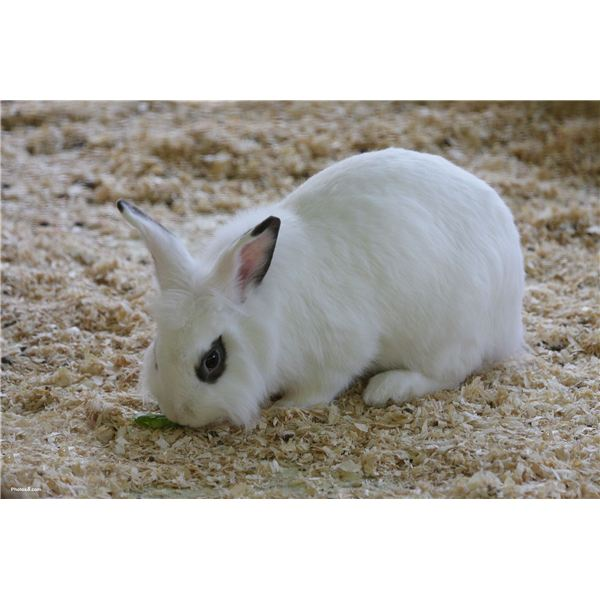 Rabbits Are Often Used in Posioning Tests