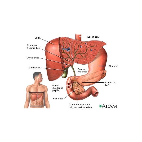 Learn about Gallbladder Removal
