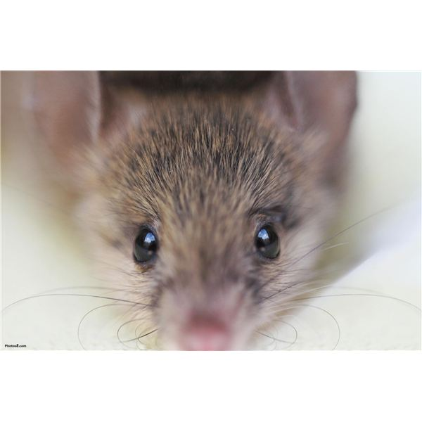 Unwanted Effects of Cosmetics are Often Tested Using Mice