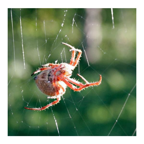 What Makes a Spider's Web Sticky? How Genes Can Help Web Spinning Spiders Catch Their Prey