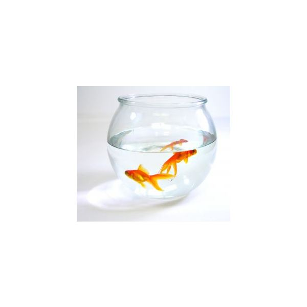 A couple of goldfish can bring life into a cubicle