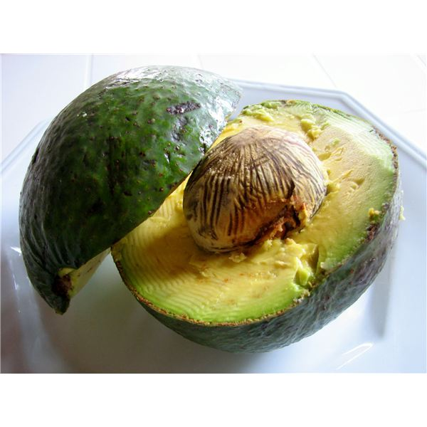 avocado1 xenia