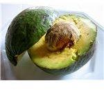 avocado1 xenia