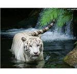 white-tiger-waterfall