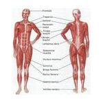 Early Childhood Lesson Plans + Human Body - muscles rogers
