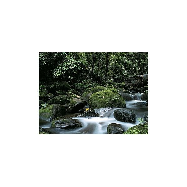 Rainforest from Earth Biomes USA.gov