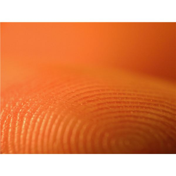 Science Experiments with Fingerprints: A Low-Tech & Effective Forensic Technique