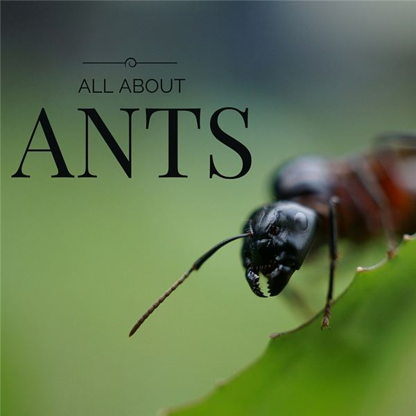 Ant Facts: Learn about Their Capabilities, How They Communicate and Different Species of Ants