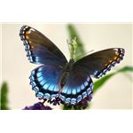 Panspermia and the Origin of Life on Earth: butterfly