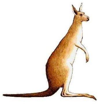https://commons.wikimedia.org/wiki/File:Kangaroo.png