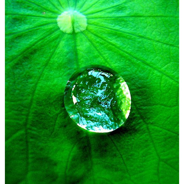 568px-Water drop on a leaf